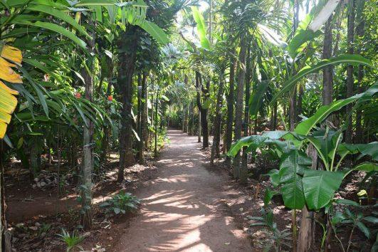 Spice plantation in Goa
