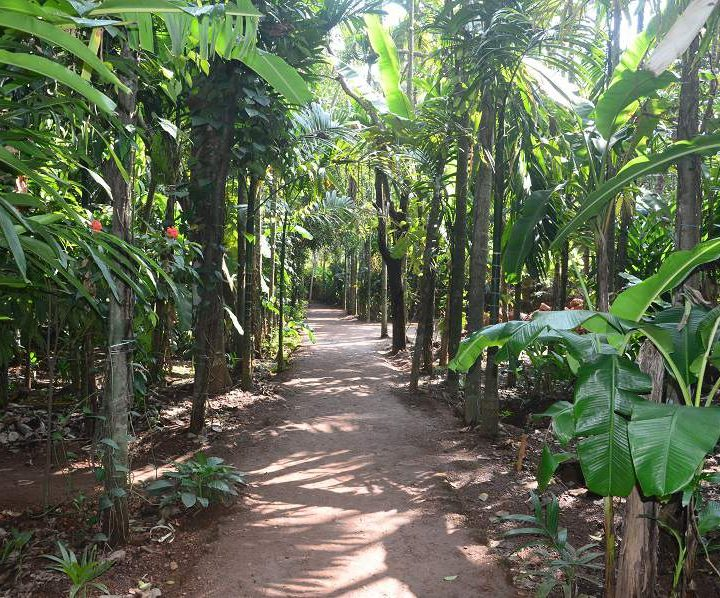 Spice plantation in Goa