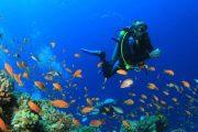 Scuba Diving trip Goa